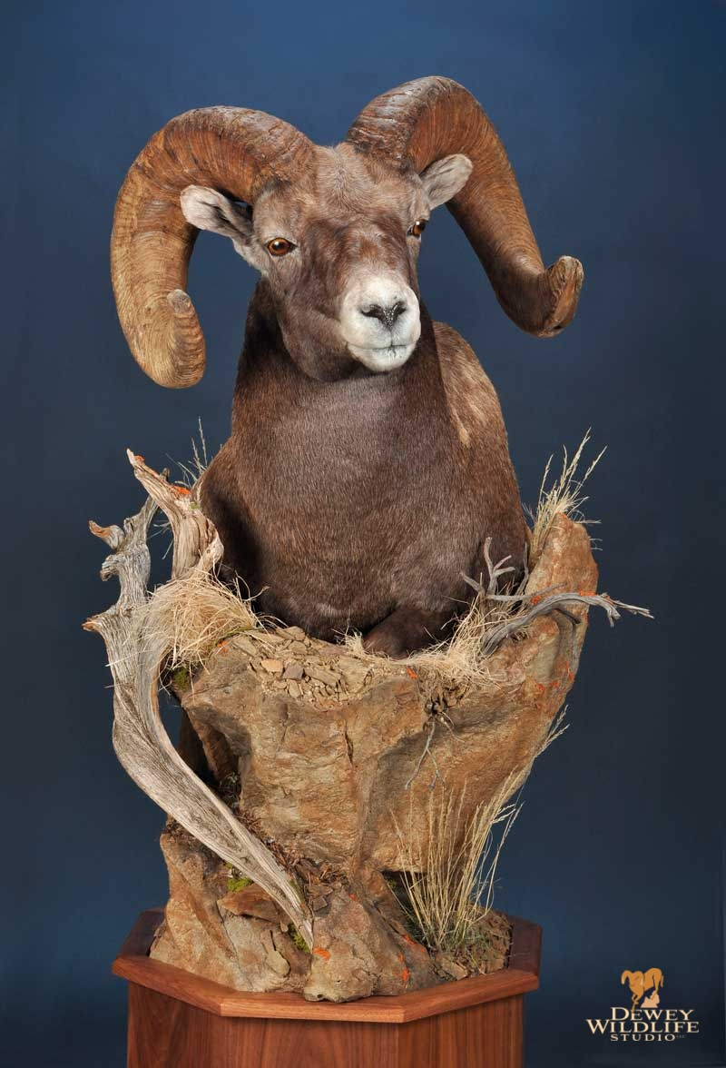 Wild Sheep Pedestal Mounts Dewey Wildlife